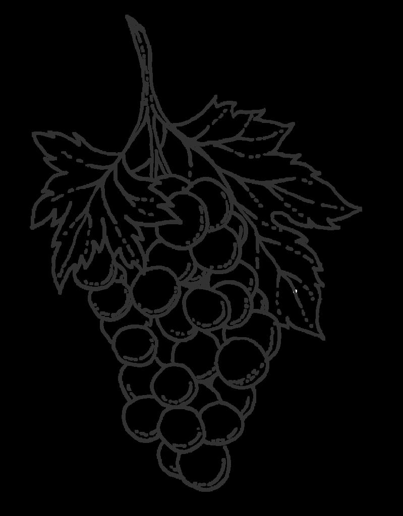 Haute Cabrière Grapes Franschhoek Illustration